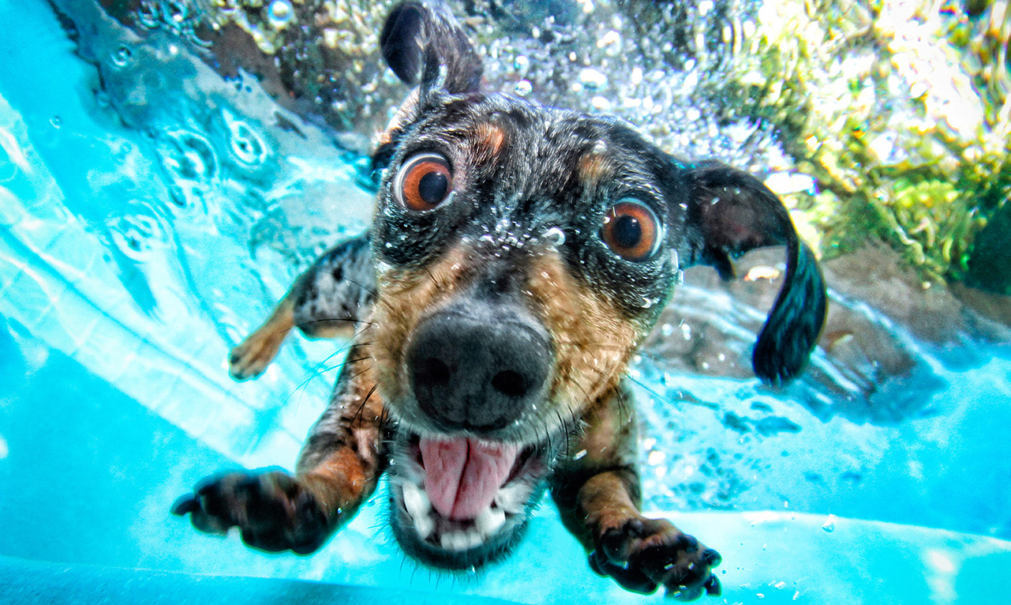 Valbo hundtrim och sim